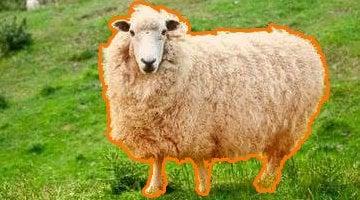 Сколько процентов шерсти и других тканей должно иметь пальто?
